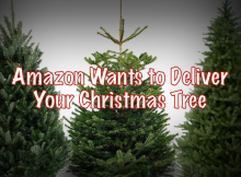 Amazon Christmas Trees